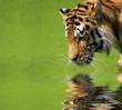 canvas print picture sibirischer Tiger