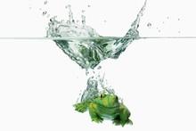Wasser Frosch 1