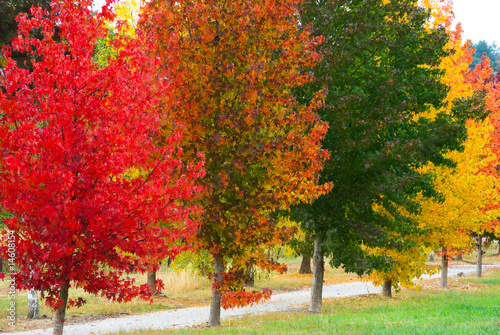 Poster Cuban Red Autumn