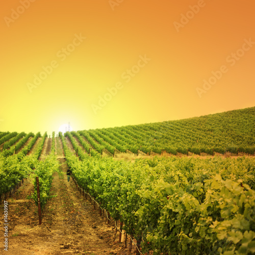 Poster Wijngaard Vineyard on a hill