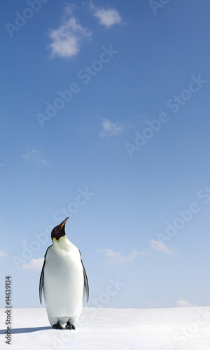 Ingelijste posters Antarctica Looking up