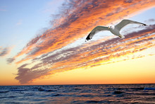Sunset With Shape Of Seagull.