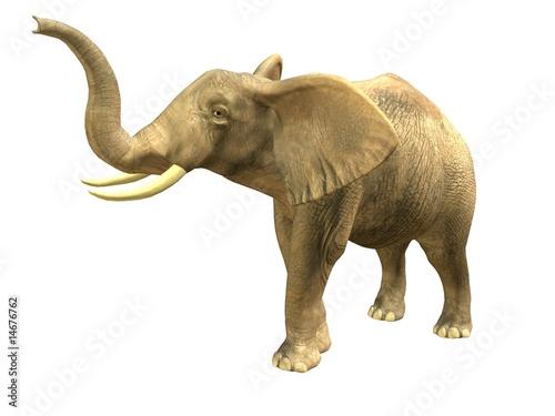 Foto op Aluminium Olifant Scenting elephant