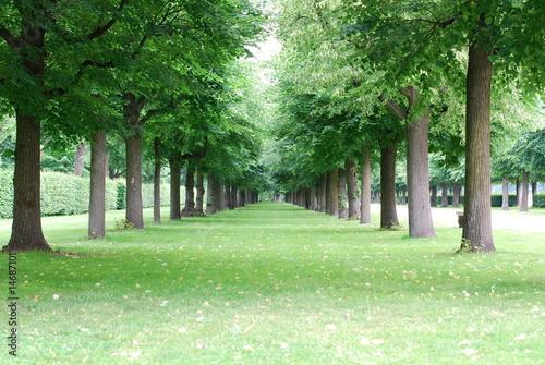 Tuinposter Weg in bos 並木