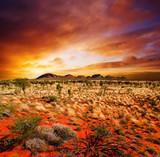 Sunset Desert Beauty