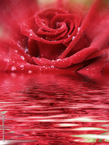roza-refleks