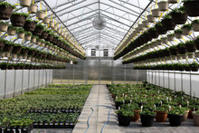 Inside A Small Greenhouse