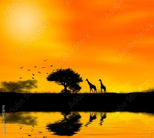 zyrafa-afryka