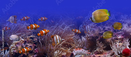 Poster Sous-marin Tropical fishes