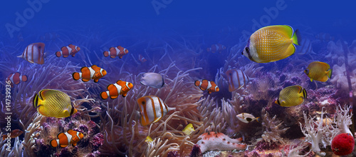 Fotografie, Obraz  Exotic fishes