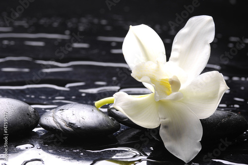 Door stickers Spa Spa still with white flower