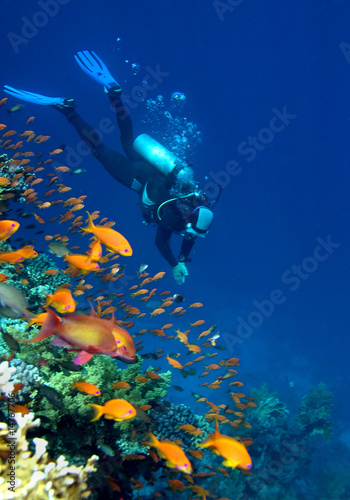 Cuadros en Lienzo Corals, fishes and diver