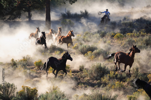 Photo sur Toile Bestsellers Day On The Ranch