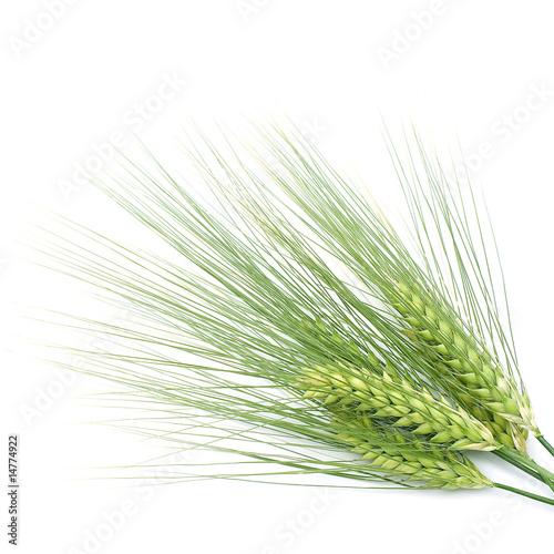 Fotomural green barley