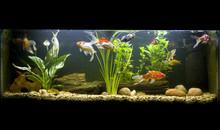 Goldfish Fishtank