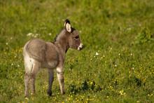 Baby Donkey I