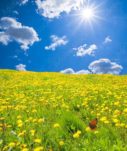 Foto-Duschvorhang - Blumenwiese