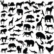 big collection of different animals - vector