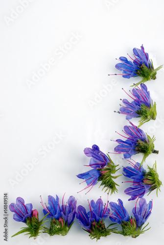 Fototapety, obrazy: Flower frame