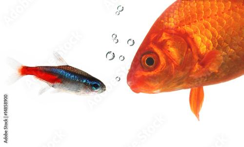 Canvastavla Gespräch unter Wasser