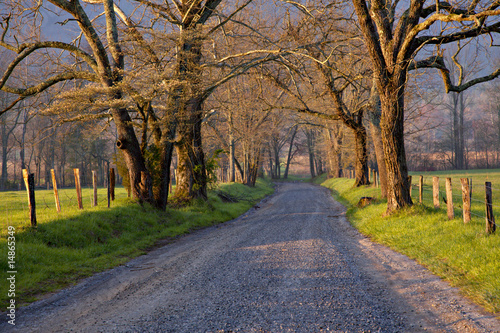 Fototapety, obrazy: Beautiful un-paved country road lined with large trees
