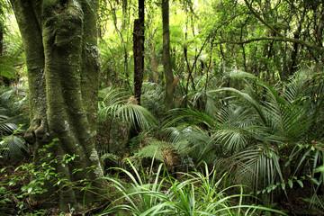 Fototapeta Tropical forest
