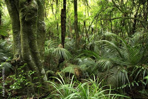 Foto-Kissen - Tropical forest