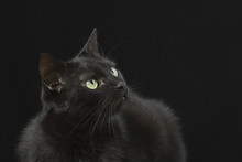 Sitting Black Cat On The Black Background