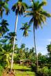 palms on tropical island cuba
