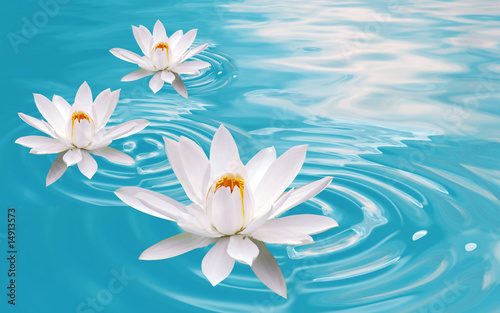 Poster Water lilies waterlily dreams