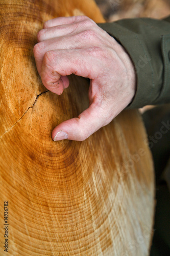 Valokuva  main comptant les ligne d'un tronc