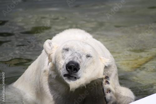 Eisbär Poster