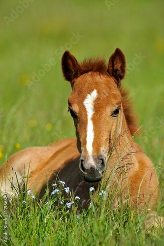 Foto-Flächenvorhang ohne Schienensystem - Horse (von kyslynskyy)