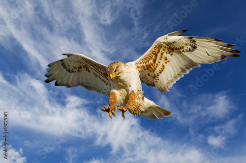 Photo Stands Eagle Ferruginous attack