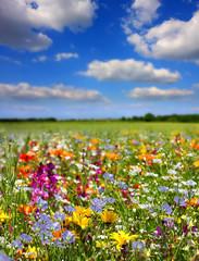 Obraz na SzkleFleurs de printemps