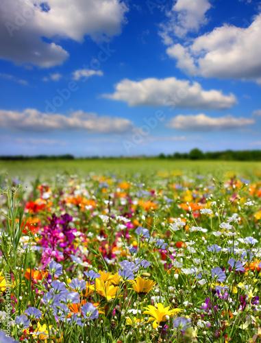 Papiers peints Fleuriste Fleurs de printemps