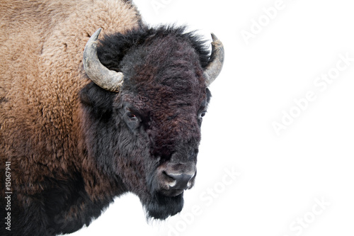 Keuken foto achterwand Bison American Bison isolated on white