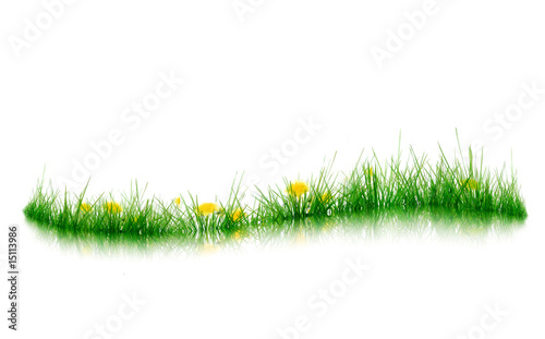 Keuken foto achterwand Paardenbloem Graskante
