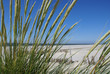 Schilf am Strand