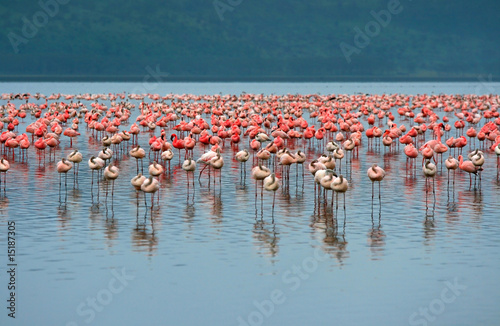 Tuinposter Algerije flocks of flamingo