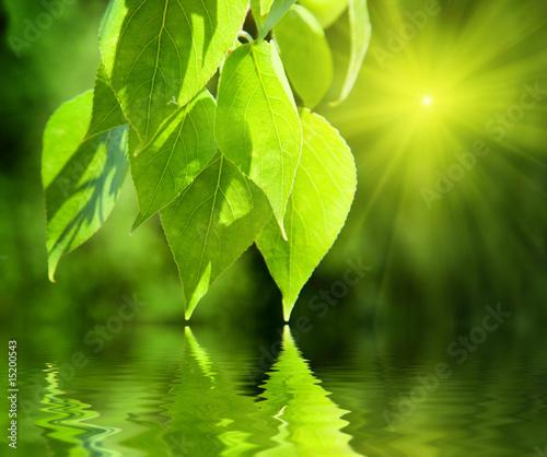 Akustikstoff - leaves of poplar