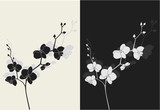 Beautiful orchid with shadow, duotone vector illustration