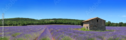 Printed kitchen splashbacks Lavender Panorama de provence