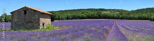 Garden Poster Lavender les champs de lavande