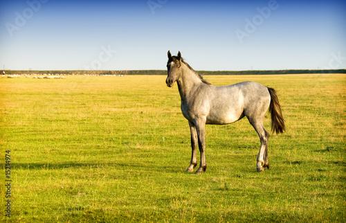 Foto-Schiebevorhang (ohne Schiene) - horse (von Željko Radojko)