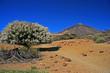 Panorama - Teide - Teneriffa