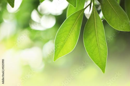 Foto-Kissen - Fresh green leaves (von logoboom)