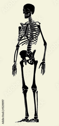 Photo Human Skeleton Vector 03