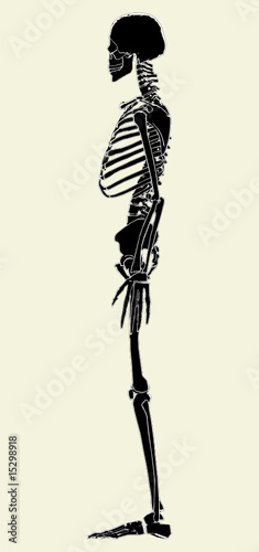 Photo  Human Skeleton Vector 02