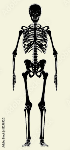 Photo Human Skeleton Vector 01